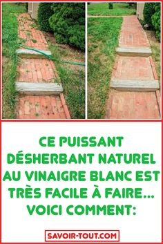 Comment Planter, Growing Plants, Permaculture, Horticulture, Grass, Diy And Crafts, Planters, Outdoor Structures, Vegetable Garden