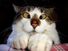 vol-met-katten-froot22