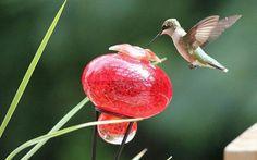 ♡ humming bird