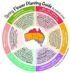 Grow now spring gardening in australia on pinterest for Gardening zones australia