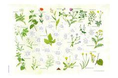 bloemen van bermplanten zoekkaart.JPG (870×580)