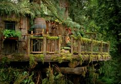 A gorgeous tree house that I sort of imagine Marlia's house to look like. Cool Tree Houses, Unusual Homes, Cabins And Cottages, Willow Tree, In The Tree, Cabins In The Woods, Play Houses, My Dream Home, Architecture Design