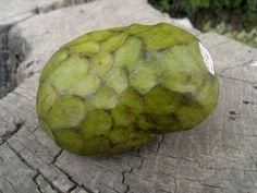 cherimoya