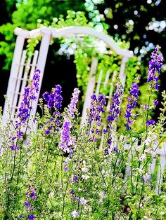 Larkspur will light up your garden with spikes of blue, lavender, pink or white flowers! More of the easiest seeds to start: http://www.bhg.com/gardening/yard/garden-care/easiest-seeds-to-start/?socsrc=bhgpin060913larkspur=6
