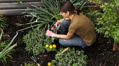 Tools for Being a Healthy Gardener - Doctors Of Physical Therapy