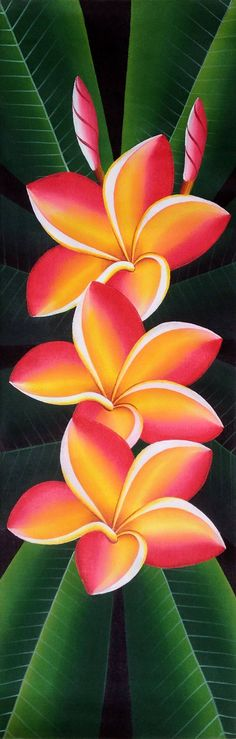 "Buy Frangipani, a Acrylic on Canvas by Natalia Davis from . It portrays: Floral, relevant to: acrylic, pink, yellow, flower, Frangipani, long Beautiful acrylic painting ""Frangipani flower"""