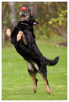 Obedience Training Tip For Your Dog - K9 Training HUB