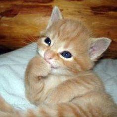 Cute Kitten - shiriny Photo