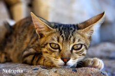 #Kot w Sylwestra
