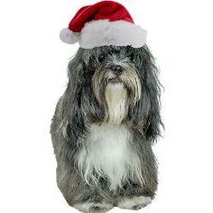 Tibetan Terrier. Merry Christmas !!!