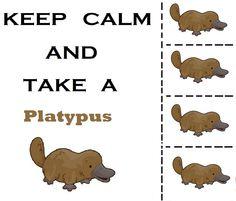 Keep Calm Duck Billed Platypus, Baby Animals, Cute Animals, Australia Animals, Echidna, Doodle Inspiration, Dad Jokes, Cartoon Drawings, Designs To Draw