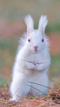 Albino squirrel - scary animals, unusual animals, animals and pets, cute animals The Animals, Cute Baby Animals, Funny Animals, Scary Animals, Amazing Animals, Unusual Animals, Animals Beautiful, Rare Albino Animals, Melanism