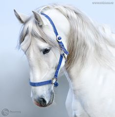 Ready for my horse portrait. Types Of Horses, Horses And Dogs, Cute Horses, Pretty Horses, Horse Love, Beautiful Horses, Animals Beautiful, Animals And Pets, Cute Animals