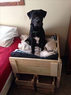 Dog bed with storage.   We were having a problem with our 80lb. Dog sleeping in our bed, we bought dog beds that were at floor level but he wouldn't stay in there all night.  So I thought if we make him think he's in our bed he will stay in his, so I elevated his bed to the same height as ours, I didn't want to lose all he space with a bulky frame so I built storage crates underneath, all made from scrap/pallet wood.