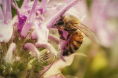 Close-up macro photo of bee on flower
