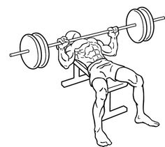 Since Arnie's heyday there seems to be something almost sacred about chest day as countless male gym goers look to build the kind of big pecs made famous by the Austrian Oak. Chest Workout For Mass, Chest Workout Women, Best Chest Workout, Good Arm Workouts, Chest Workouts, Body Workouts, Chest Routine, Compound Exercises, Arm Exercises
