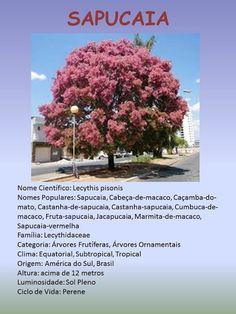 Barbara Paisagismo e Meio Ambiente: FLORADAS / SAPUCAIA