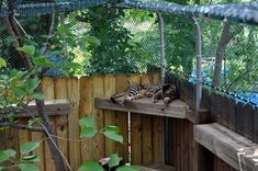 cat enclosure ideas - Google Search