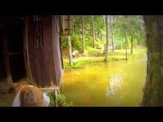 As Boxers e Irmãos labradores no Alto Manso - Jaraguá do Sul - Santa Catarina - Brasil YouTube