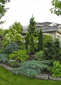 Beautiful display of landscaping with evergreens - Something like this instead of hostas by the pine trees