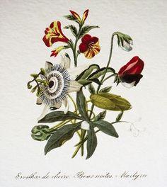 Reserve for Megan 2 Botanical Fine Print. $12.00, via Etsy.