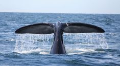 Wildlife and whale-watching on the Bay of Fundy, Grand MananIsland, New Brunswick, Canada