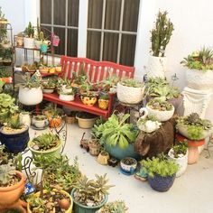 some of our succulent cactus collections