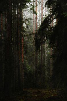 Där långa skuggor ruva - Part IV - V© Heathen Harnow - please do not remove credit Dark Forest, Forest Path, Magic Forest, Viking Age, Fantasy Landscape, Dark Wood, The Great Outdoors, Wilderness, Woodland