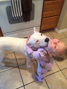 Amazing Dogo Chubby Adorable Dog - d04b7f70871503e7969708105728a8d8  Snapshot_983986  .jpg