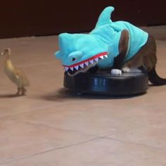 A cat in a shark suit, on a Roomba, chasing a duck, and much more -- see which viral videos you might have missed this week.