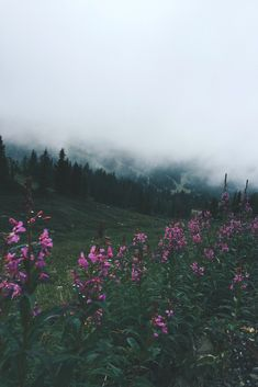 expressions-of-nature:   byJulia Anne Harris ... : expressions-of-nature