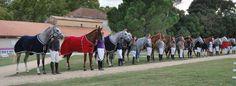 Finales nationales d'endurance jeunes chevaux - Grande Semaine d'Uzès. Présentation pour remise des récompenses. Client  : SHF.