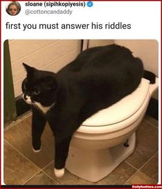 Life Hacks for Cats: 7 ways to prove your home - Süße katzen Animal Jokes, Funny Animal Memes, Cute Funny Animals, Funny Animal Pictures, Funny Cute, Haha Funny, Really Funny, Memes Humor, Cat Memes