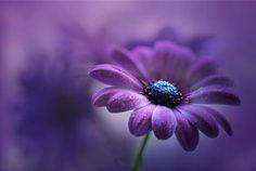 flower - fower