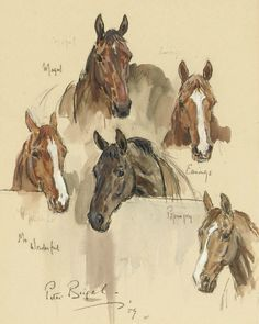 Peter Biegel (1913-1988)  Horse Portraits  pencil/watercolour/bodycolour  Things of beauty I like to see: Photo