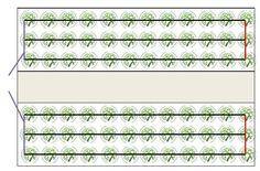 Schéma2_plantes