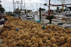The small fishing village of Tarpon Springs is famous for its Sponge Docks, which pay homage to the Greek fishing community and sponge divers.