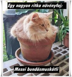20 Cute Cat-Plants You Shouldn't Water Silly Cats, Cats And Kittens, Funny Cats, Pet Cats, Crazy Cat Lady, Crazy Cats, Chatons Oranges, Funny Poses, Cat Plants