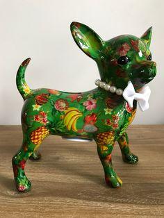 Pomme Pidou Chihuahua