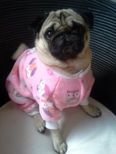 I'm not one to dress our pugs in clothes, but this is just so flippin' cute!!!  Onecy Dog clothes pyjamas custom oncey pet by MyPugsWardrobe, $35.00