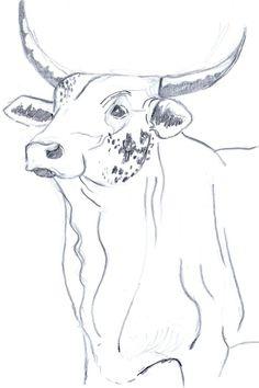carotinley: Nguni cow Challenge (pencil sketch of nguni cow, 2011)
