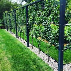 A vegetable garden surrounded by espalier is super cool. This lovely was found just outside #boston. -- #massachusetts #garden #gardening #apld #espalier #landscapedesign #vegetablegarden