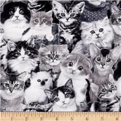 Show details for Cat Breeds Kittens and Cats Black and White Cotton Fabric Cat Fabric, Patchwork Fabric, Cotton Quilting Fabric, Grey Fabric, Grey Cats, White Cats, Fabric Animals, Like Animals, Fluffy Cat