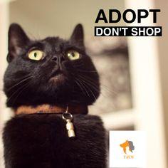 Adopt Don't Shop! #adoptdontshop