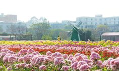 """Guangzhou is famous as the """"Flower City""""."""