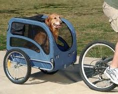 Taking your dog on your bike trailer is a great way to be dogs best friend.  If you have multiple dogs, you'll need multiple bike trailers (maybe...)