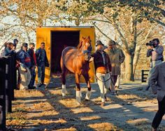 Secretariat arriving at Clairborne The greatest race horse that ever lived. SO impressive!! And handsome, too.... :)