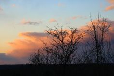 sunset clouds over trees