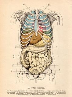1901 Anatomy Antique Print Vintage Lithograph Situs by Craftissimo