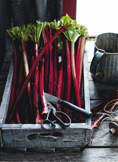 Rhubarb | Photography Chris Court